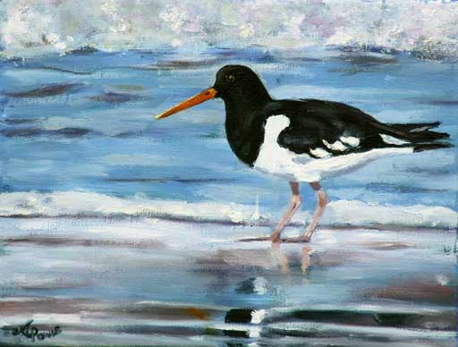 Andrea Power Dingle Artist's Oyster Catcher on the Wild Atlantic Way