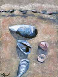 Andrea Power Dingle Artist Seashells